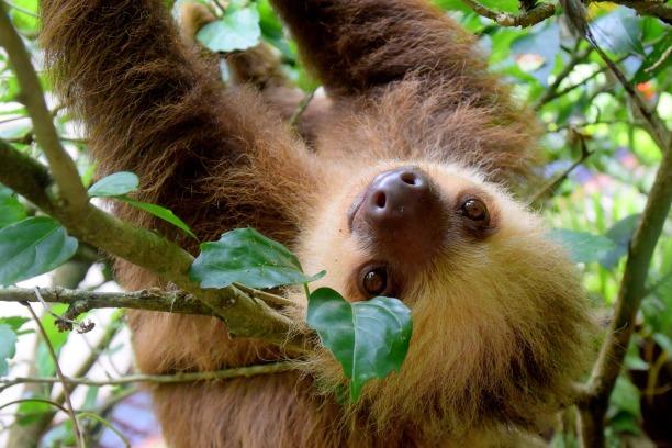 sloth-1879999_1920